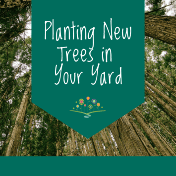 Planting New Trees in Your Yard