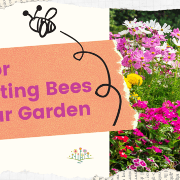 Tips for Attracting Bees to Your Garden